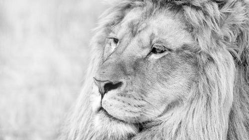 White Lion CMS 1.0